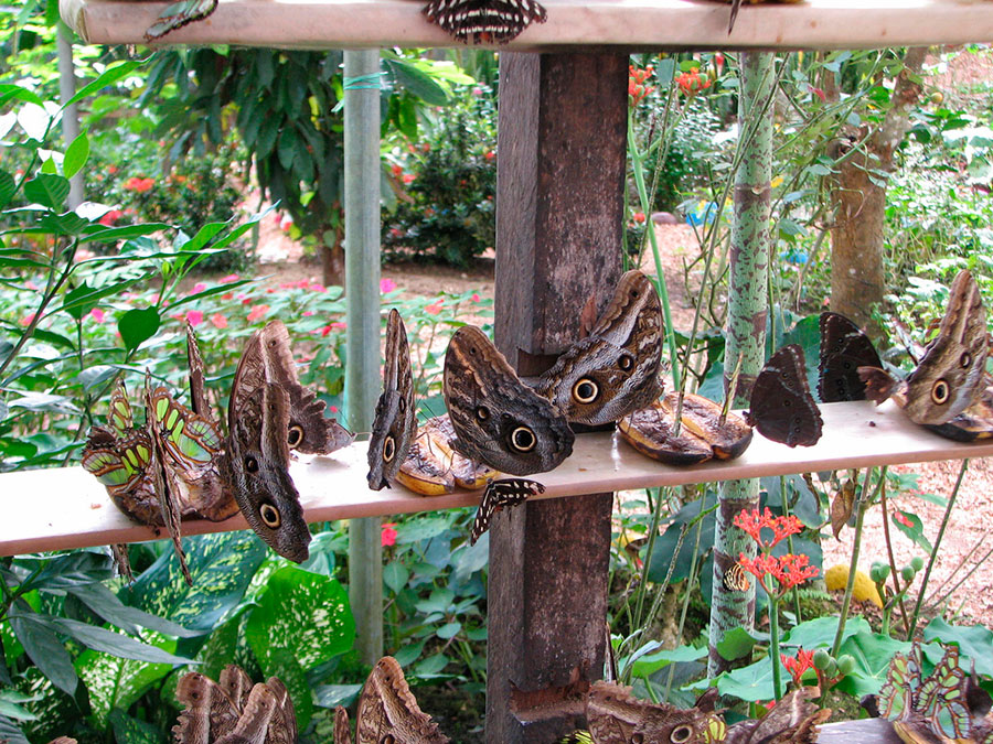butterfly farm Napo
