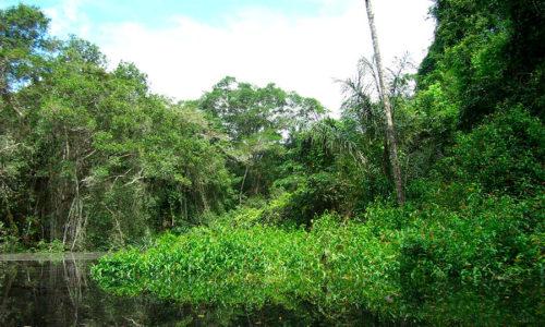 Cuyabeno Lago Agrio
