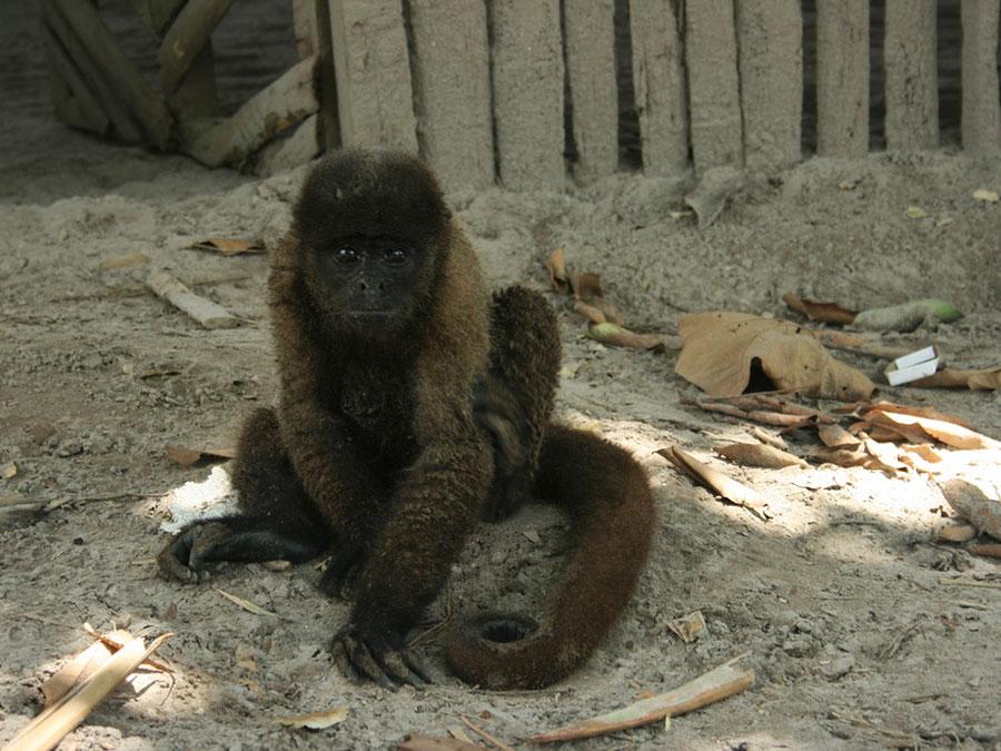 Amazon wild life