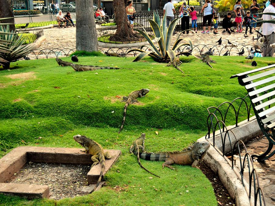 Iguanas Park