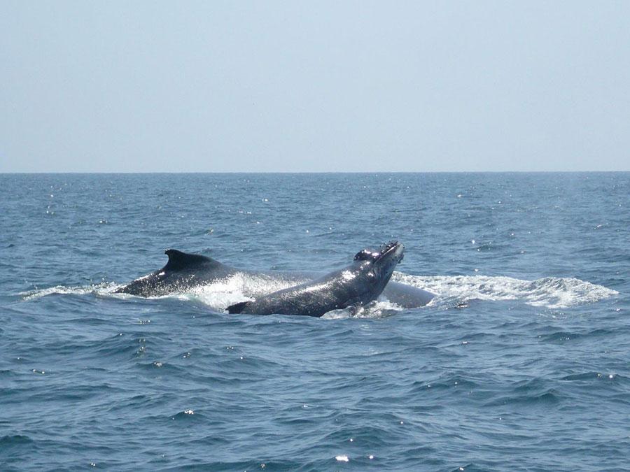 Puerto Lopez ballenas