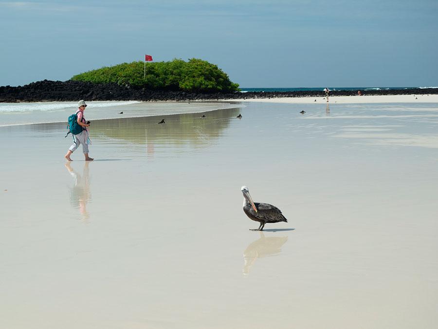 Santa Cruz Island playa