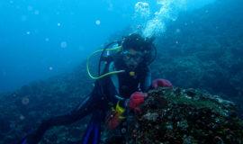 Gordon Rock Diving