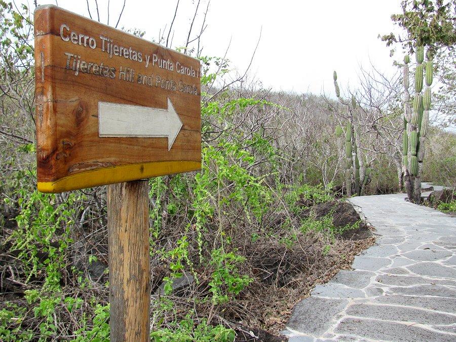 Bosque cerro tijeretas