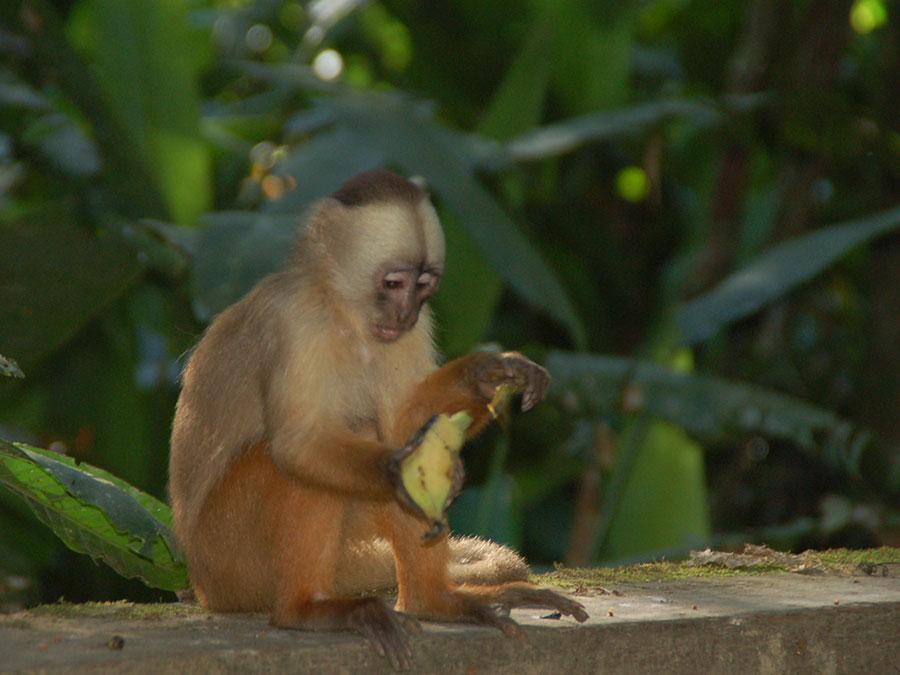 Monos en la selva amazonica